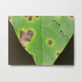 rotten leaf Metal Print