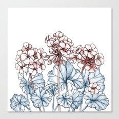 Pelargonium Canvas Print