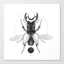 Sun Beetle Canvas Print