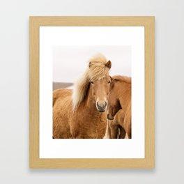 Icelandic Chestnut Horse Framed Art Print