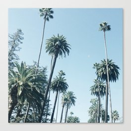 Look Up It's Palms Canvas Print