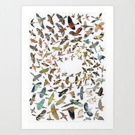 Bird, Birds, Birds Art Print