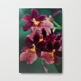 The mystery of orchid(13) Metal Print