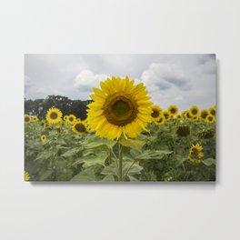 Sunflower Fields Forever Metal Print