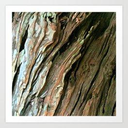 Old Olive tree weathered wood Art Print