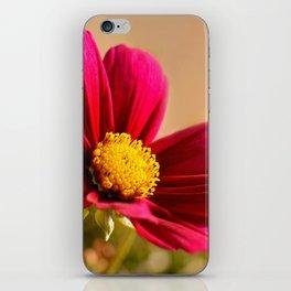 Cosmea macro 073 iPhone Skin