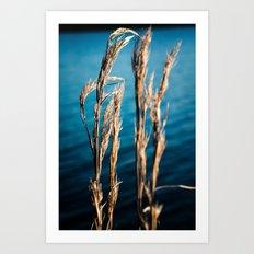 Wispy and Blue Art Print