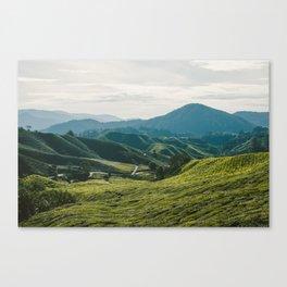 Tea Fields Canvas Print