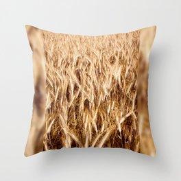 golden cereal grain ears on field Throw Pillow