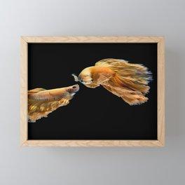 Multi-color betta fish, siamese fighting fish  Framed Mini Art Print