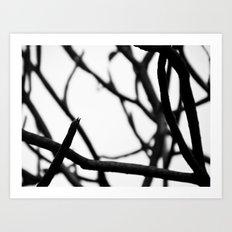 Branch Art Print