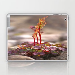 Wildflower between stones scandi landscape Laptop & iPad Skin