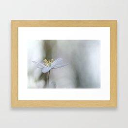 Adorable Wood Anemone... Framed Art Print