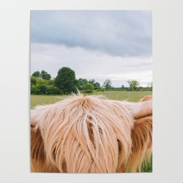Highland Cow - Longhorns Poster