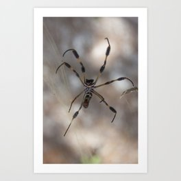 Spider 1 | Picture A Art Print