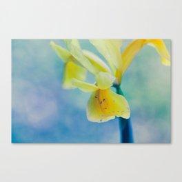 Yellow spring flower Canvas Print
