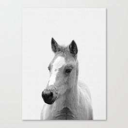 Baby Horse, Farm Animal Print Canvas Print