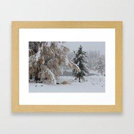 Snowy pine Framed Art Print
