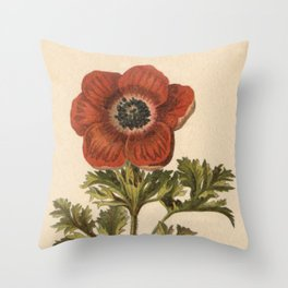 1800s Encyclopedia Lithograph of Anemone Flower Throw Pillow