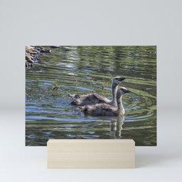 Two Goslings Taking a Swim, No. 2 Mini Art Print