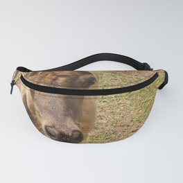 Curious miniature horse foal Fanny Pack