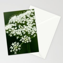 wild herbs Stationery Cards