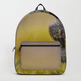 Water Snake - Natrix maura Backpack