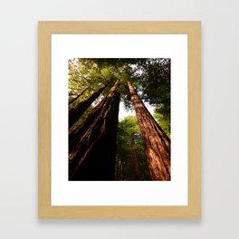Redwood Tree Tops Framed Art Print