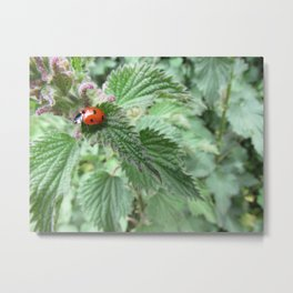 Ladybird on a stinging nettle Metal Print