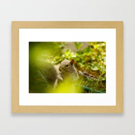 Squirrel! Framed Art Print
