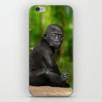gorilla iPhone & iPod Skins featuring Gorilla by Julie Hoddinott