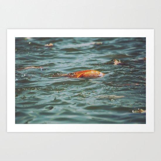 Fish, Borneo Art Print