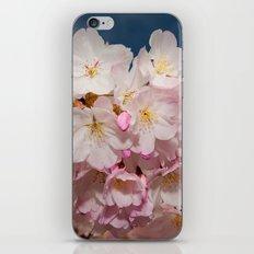 Springtime Cherry Blossoms iPhone Skin