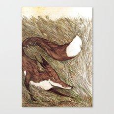 La Ruse du renard (The Sneaky Red Fox) Canvas Print