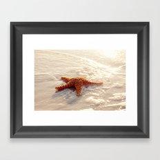 Sugar Starfish I Framed Art Print