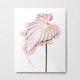 Pink Caladium Metal Print