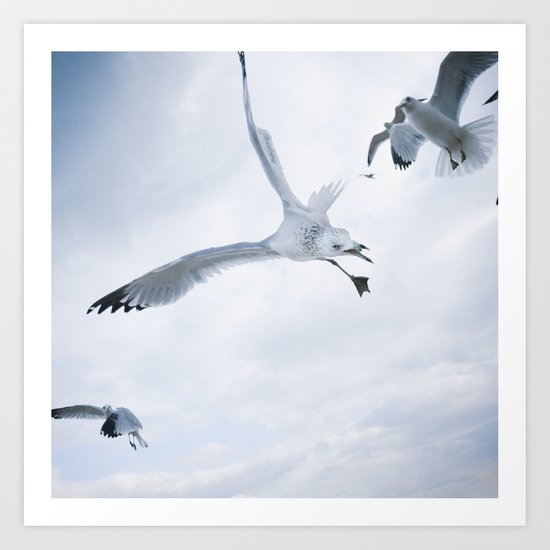 Seagull {Two} Art Print