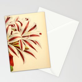 Flower brunswigia magnifica 27 Stationery Cards