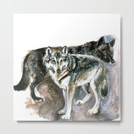 Canadian Wolf (c) 2017 Metal Print