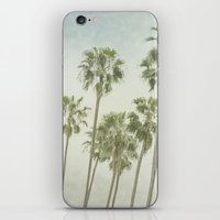 palm trees iPhone & iPod Skins featuring Palm Trees by Pure Nature Photos