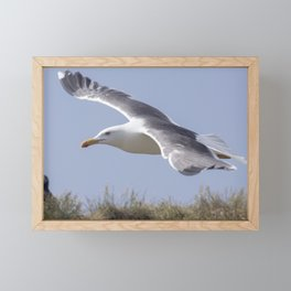 Seagull in flight Framed Mini Art Print