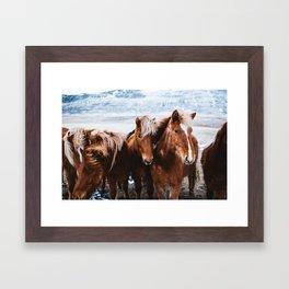 Red Horses Framed Art Print