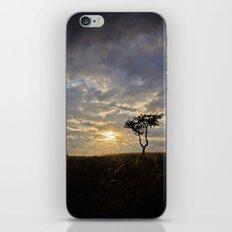 Phoenix Sunset iPhone & iPod Skin