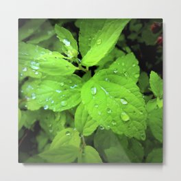 Raindrop on a Leaf Metal Print