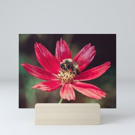Pollen Collection. Bee Photograph Mini Art Print