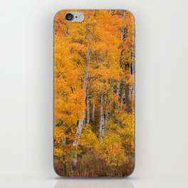 Colorful Idaho Forest iPhone Skin