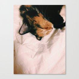 Sleeping Kitty Canvas Print