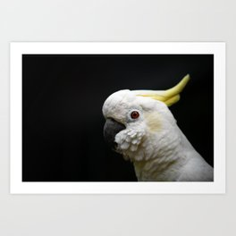 Cockatoo close-up in profile. Art Print