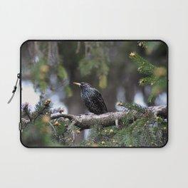 European starling Laptop Sleeve