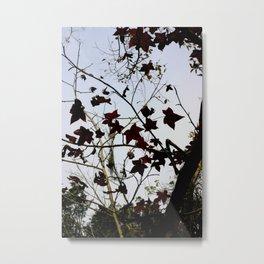 Bayou Stars (natural) Metal Print